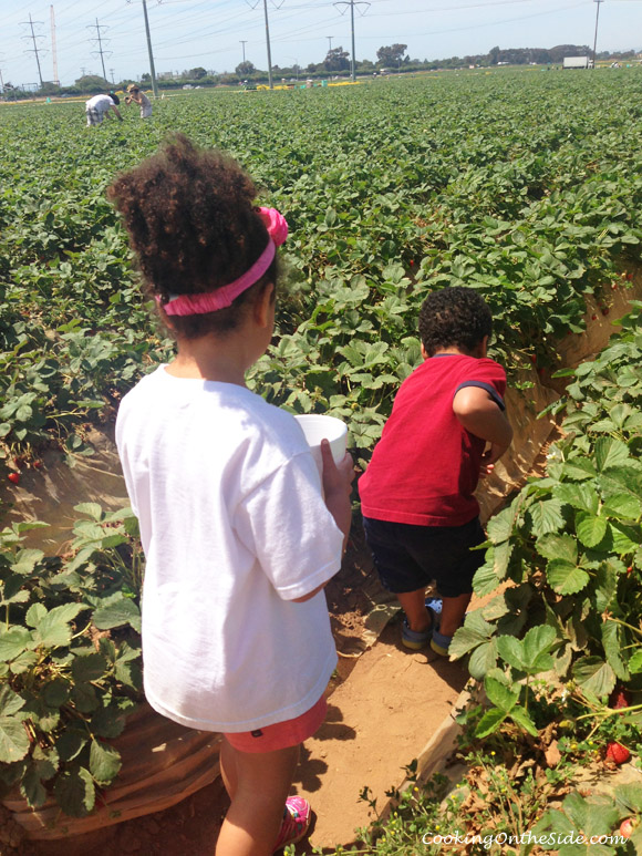 On the strawberry hunt